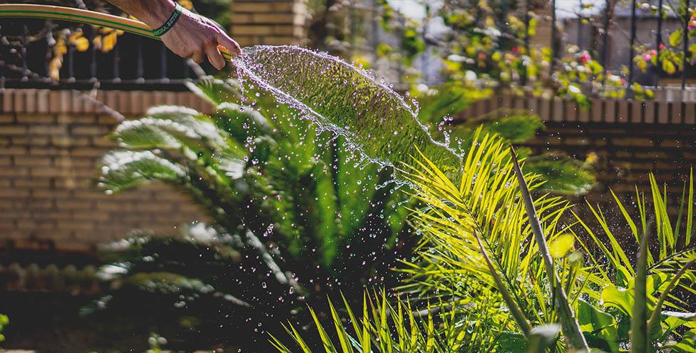 irrigazione piante da vivaio