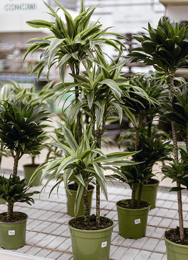 vivai-ricciotti-piante
